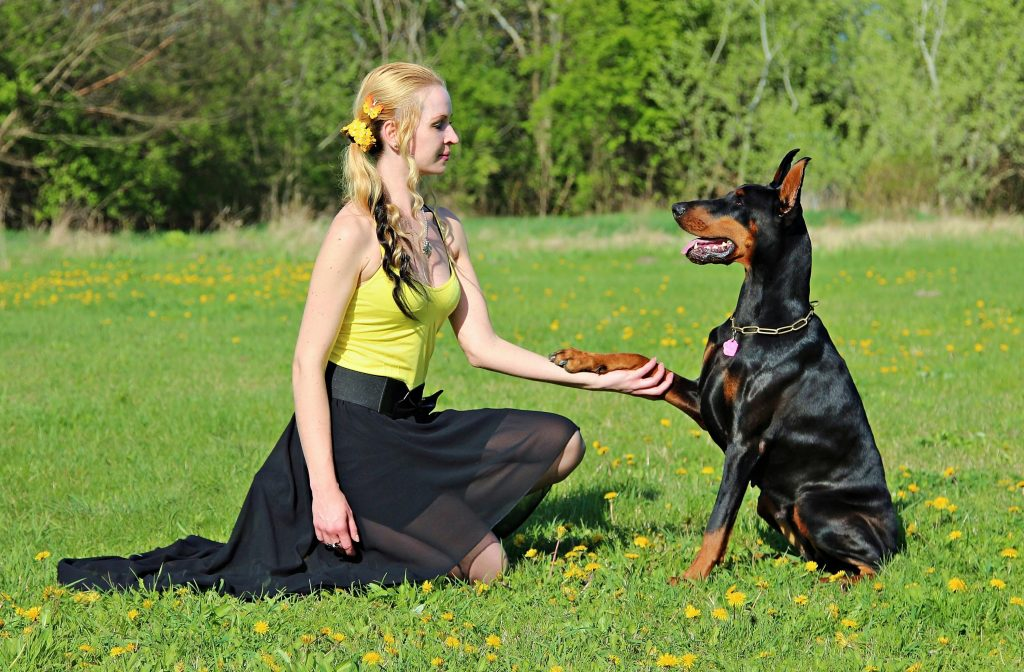 A lady in yellow holding paws with a sitting doberman dog.