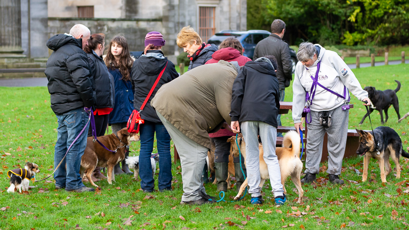 gooddoggie pack walk dog socialising